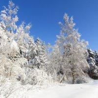 Морозный день :: Андрей Снегерёв