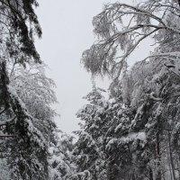 Зимний день :: Лара (АГАТА)