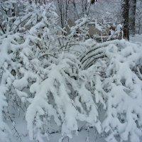 после снегопада-2 :: Людмила