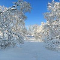 зима,мороз :: ninell nikitina