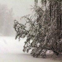 Под снегом :: Александр
