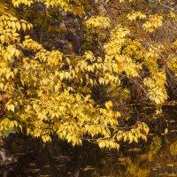 « Лесная гладь осеннего пруда И конфетти из листьев по воде!..» :: Андрей Нибылица