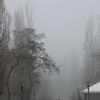 Прогулка в тумане :: Анатолий Шулков