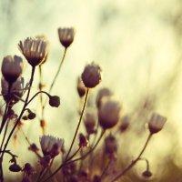 цветы :: Алексей