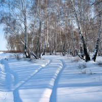 Берёзы и снег :: Владимир