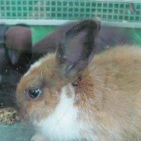 кролики :: Зинаида