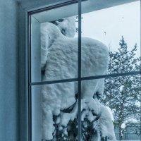 Зима за окном :: Сергей Розанов