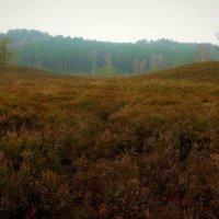 Туман в вересковой долине :: Nina Yudicheva