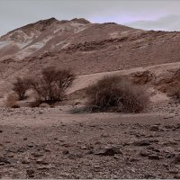 Зима в пустыне. :: Lmark