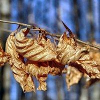 зимние листья :: юрий иванов