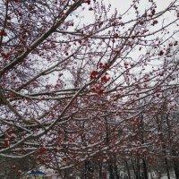 Ягоды в снегу :: Татьяна Котельникова