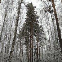 Зимы красоты ... :: Татьяна Котельникова
