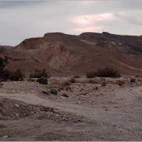 В пустыне Негев зимой, под вечер. :: Lmark