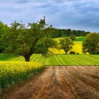 весеннее разноцветье :: Elena Wymann