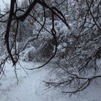 Доказательства зимы :: Андрей Лукьянов