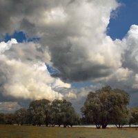 И мысли в ожидании грозы... :: Лесо-Вед (Баранов)