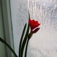 Аленький цветок :: Анна