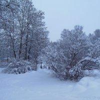 Снежная зима! :: Татьяна