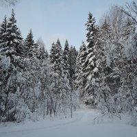 Зимний лес :: Валерия Тарасова