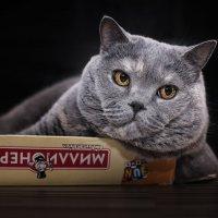 Хочешь быть счастливым котом..., веди себя как счастливый кот, хочешь быть богатым...., ну ты понял. :: Лилия .