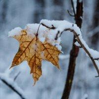 «  Последний лист – последнее письмо, Последней осени, уже спешащей мимо,…» :: Андрей Нибылица