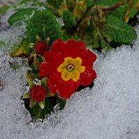 """Весна идет!!!"" :: Galina Dzubina"