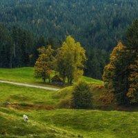 Про альпийские склоны :: Владимир Колесников