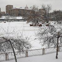 зима утро года :: Олег Лукьянов