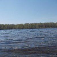 озеро :: Светлана Рябова