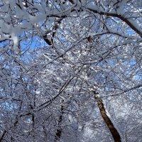 Зимний парк :: Владимир Бровко