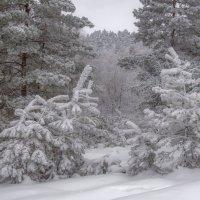 Стоит, окутан тайной, хвойный лес... :: Наталья Димова