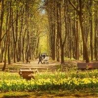 Май в Нескучном саду :: Михаил Танин