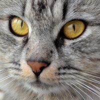Эти глаза напpортив........... :: Анастасия Фомина