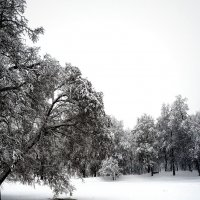 Занесённый снегом пруд :: Михаил Малец