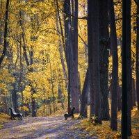 Осень в Нескучном саду :: Михаил Танин