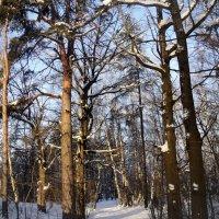 Белым снегом, белым снегом... :: Ольга Кривых