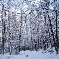 Зимний лес в феврале 2018 года! :: Ольга Кривых