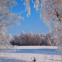 Морозный день :: ГАЛИНА Баранова