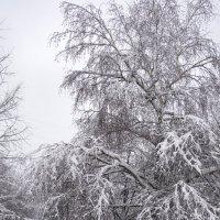 заснеженный двор :: Лариса Батурова