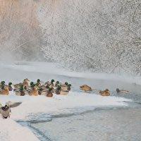 Зима на реке. :: Александр Поборчий