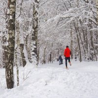 ПРОгулки и ПРОбежки в зимнем лесопарке :: Александр Орлов