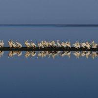почему то все стоят в узкой ширине, когда берег не далеко и место бы хватало для всех ? :: Георгий А