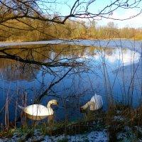 Лебеди на зимнем озере :: Nina Yudicheva