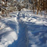 Снежок :: Фима Розенберг