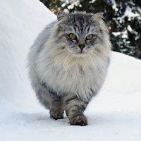 Настоящий Сибиряк :: Mi Fo