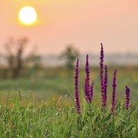 Утренняя....... :: Олег Сахнов