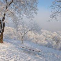 В зимнем убранстве :: galina tihonova