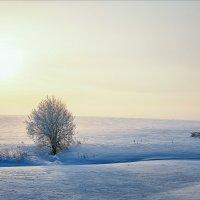Холодное утро... :: Александр Никитинский