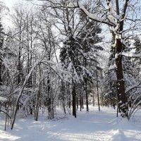 зимний лес :: Августа