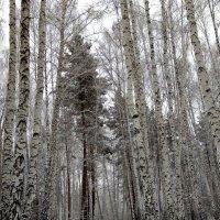 Зима в феврале свой багаж собирала: метели, сугробы, пургу паковала... :: Татьяна Котельникова